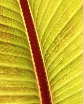 Leaf by Anne Thurston
