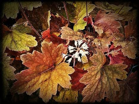 Leaf Detail by Michael L Kimble