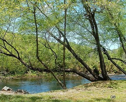 Leaning Tree by Glenda Barrett