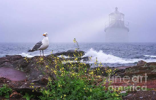 Lighthouse Overlay by Sharon Seaward