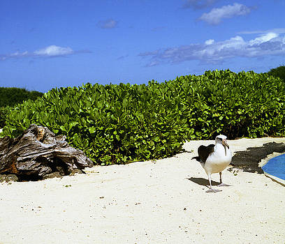 John Bowers - Likes Long Walks Along the Beach
