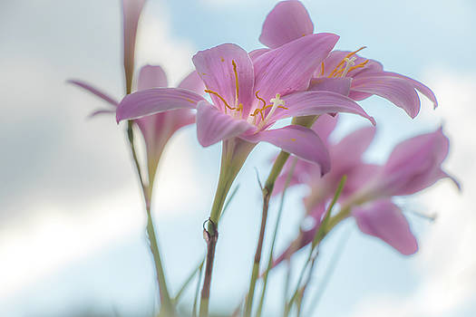 Lilies for today by Jeff Sebaugh