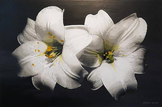 Lilies Harmony by Jesse Waugh