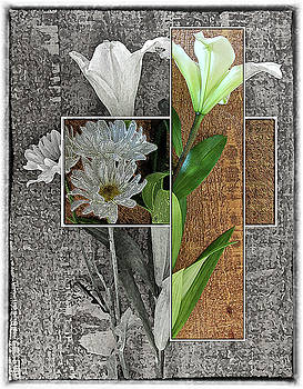 Lily by Dw Johnson