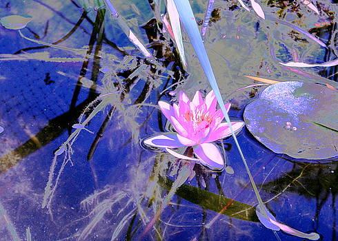 Lily Pond Pink by M Diane Bonaparte