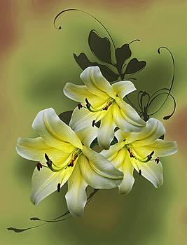 Lily Trio by Judy Johnson