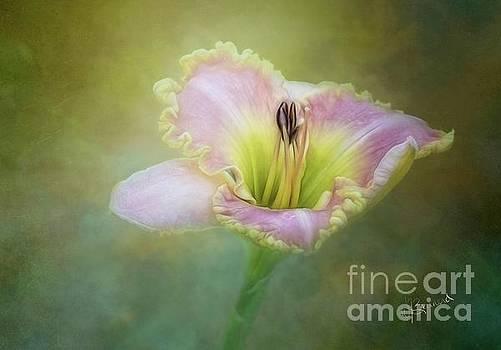 Lily by Warrena J Barnerd