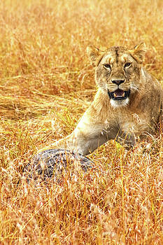 Mauverneen Blevins - Lion With Kill