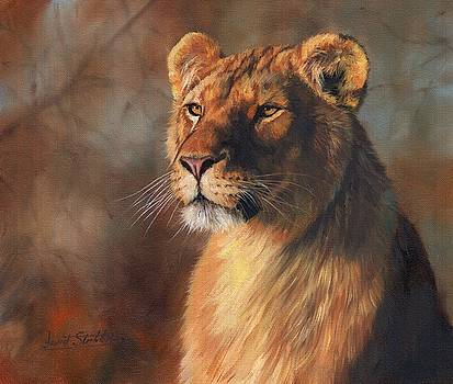 Lioness Portrait by David Stribbling