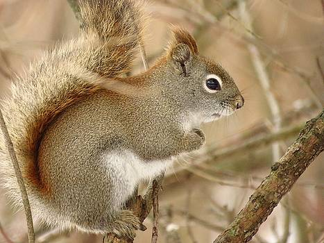 Little Bushy Tail by Lori Frisch