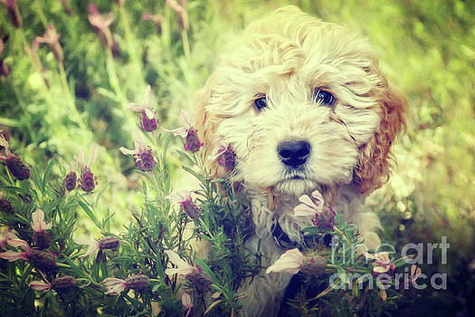 Little puppy by Angela Doelling AD DESIGN Photo and PhotoArt