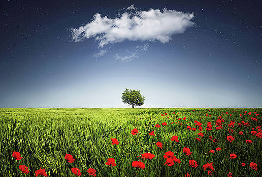 Lone tree a poppies field by Bess Hamiti