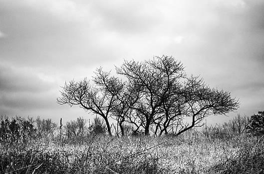 Dark Tree on the Horizon by Kelly Anderson