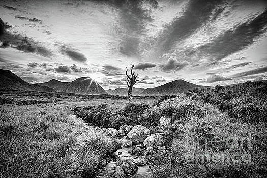 Lone Tree, Rannoch Moor, Scotland by Colin and Linda McKie