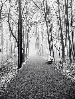 Lonely Bench by Luis Lugo