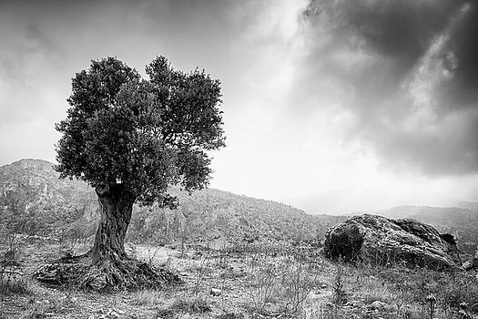 Lonely olive tree and stormy cloudy sky by Michalakis Ppalis