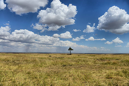 Solitude by Balram Panikkaserry