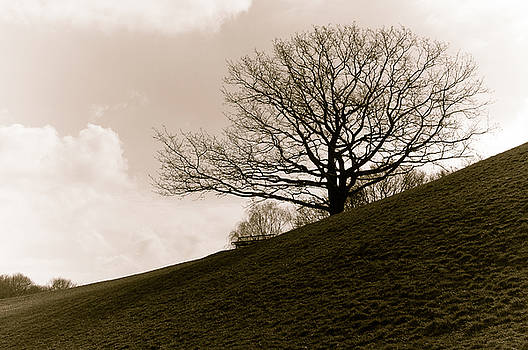 Lonely tree by Sergey Simanovsky