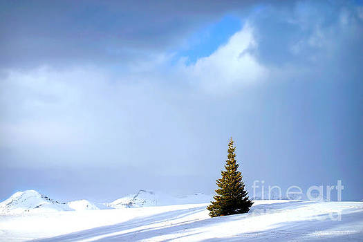 Lonesome Pine by Beth Ferris Sale