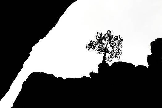 Marilyn Hunt - Looking Up