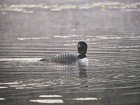 Steven Ralser - Loon on Lake Pennesseewassee - Norway - Maine