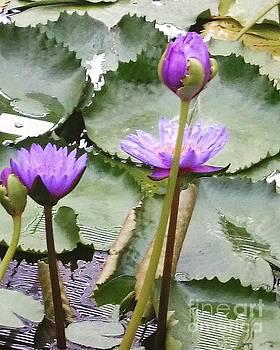 Lotus flower by Sobajan Tellfortunes