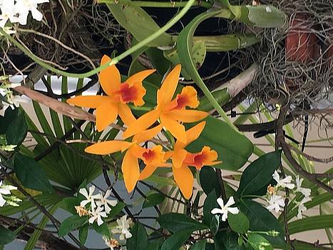 Lovely Orchids by Kay Gilley