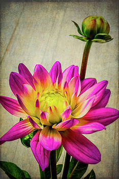 Lovely Textured Dahlia by Garry Gay