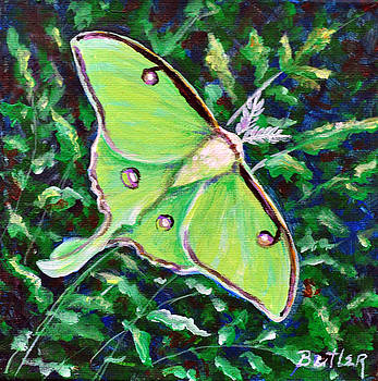 Luna Moth by Gail Butler