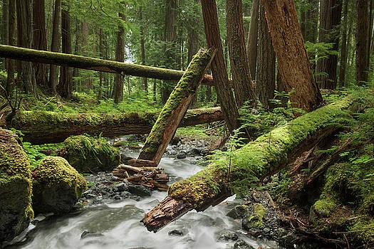 Lupin Falls Creek by Adam Gibbs