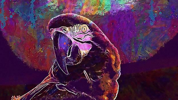 Macaw Blue Yellow Bird Beak  by PixBreak Art