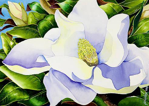 Magnolia in Leaves by Janis Grau