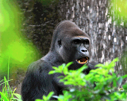 Male Gorilla 1 by Steven Howes