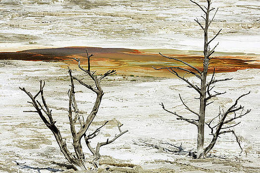 Mammoth Hot Springs Upper Terraces in Yellowstone National Park by Louise Heusinkveld