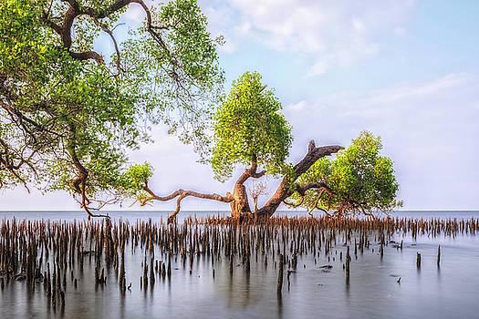 mangrove trees - Java by Joana Kruse