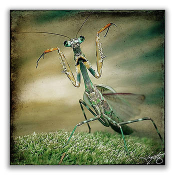 Ingrid Smith-Johnsen - Mantis 16
