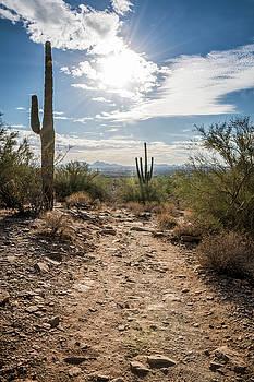 McDowell Trails by David Hart