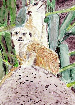 Meerkats by Barry Jones