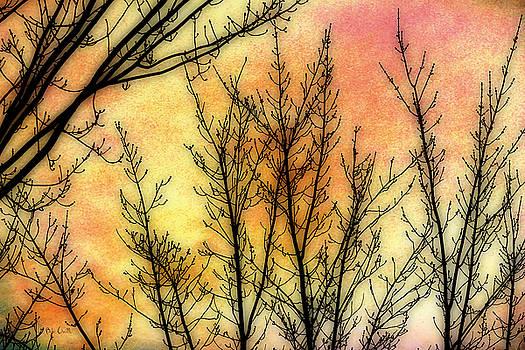 Memory of Trees by Bob Orsillo