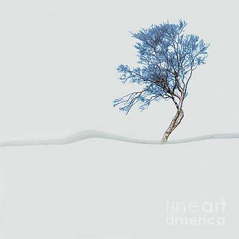 Mindfulness Tree by LemonArt Photography