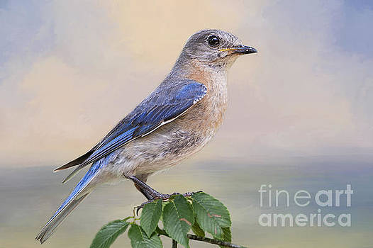 Misty Morning Bluebird by Bonnie Barry