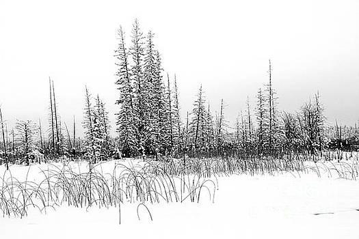 Roland Stanke - misty reeds