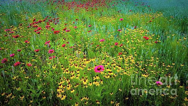Mixed Wildflowers In Bloom by D Davila