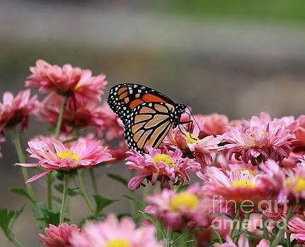 Monarch Butterfly by Lori Tordsen