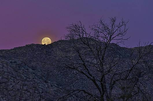 Moon set at sunrise by Gaelyn Olmsted