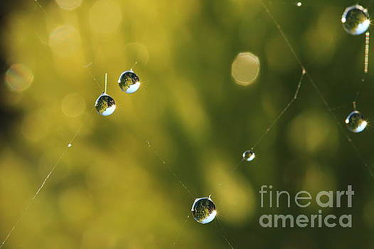 Morning dew 3 by Peter Skelton