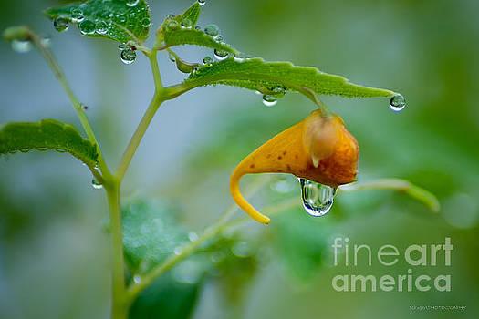 Morning Dew by Patrick Shupert