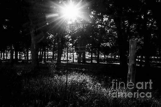 Morning Shadows by Diana Mary Sharpton