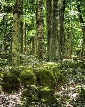 Mossy Forest by Nikki McInnes