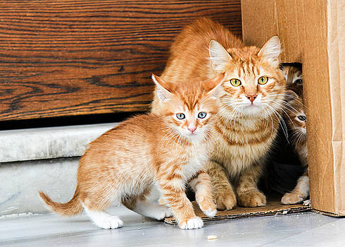 Mother And Baby Cat by Freepassenger By Ozzy CG